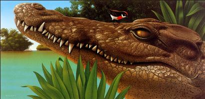 Роберт Гисти. Крокодил