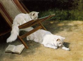 Артур Хайер. Персидские кошки