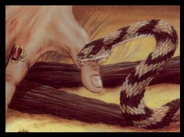 Пол Герберт. Укус змеи