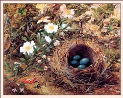 Джон Уильям Хилл. Птичье гнездо и шиповник