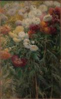 Chrysanthemum. The garden in Petit-Gennevilliers