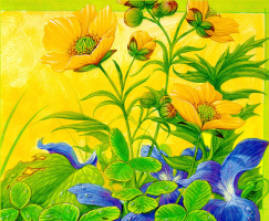 Кристофер Каньон. Желтые цветы