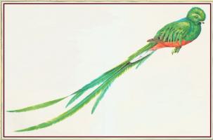 Питер Барретт. Зеленый хвост