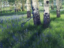 Элиот Портер. Лесной пейзаж 1