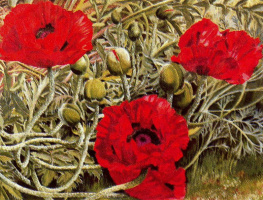 Stanley Spencer. Red poppies