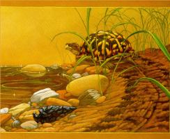 Кристофер Каньон. Черепаха