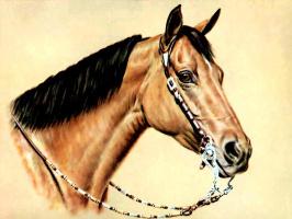 Дональд Шварц. Лошадь 15