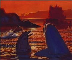 Майкл Касед. Дельфины