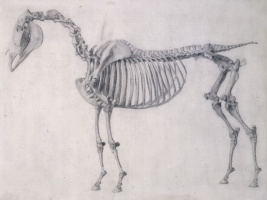 George Stubbs. The first anatomical table of the skeleton of the horse