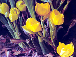 Раймонд Бут. Тюльпаны