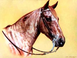 Дональд Шварц. Лошадь 14