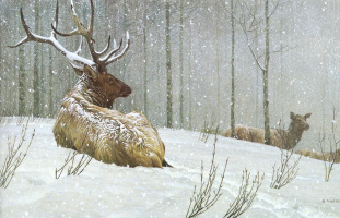 Robert Bateman. Evening snowfall