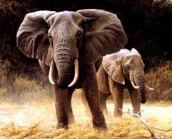 Роберт Бейтман. Слоны сафари