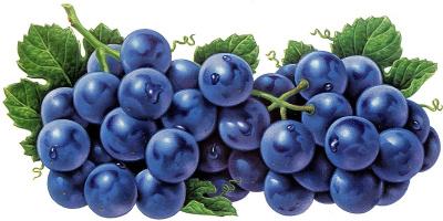 Кен Джоодри. Темный виноград