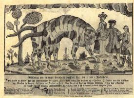 Иохан Рудольф Тиле. Изображение совершенно необыкновенной кошки с шестью лапами и двумя хвостами