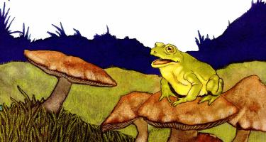Майкл Хаг. 0019 Почему Лягушка и Змея никогда не играют вместе
