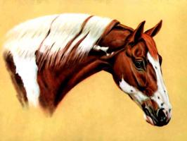 Дональд Шварц. Лошадь 9