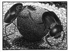 Maurits Cornelis Escher. Scarabs