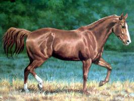 Крис Каммингс. Лошади в тумане 008 четверть лошади гнедая
