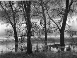 Джон Секстон. Деревья у воды