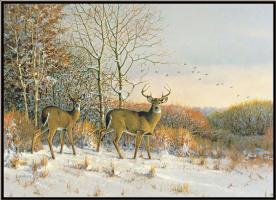 Оуэн Громм. Ранний снег. Белохвостые олени