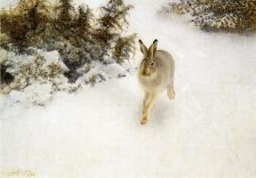 Бруно Лильефорс. Заяц-беляк