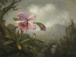 Мартин Джонсон Хед. Орхидея и колибри у горного водопада