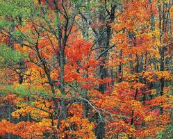 Christopher Burkett. Autumn in the Cherokee Forest