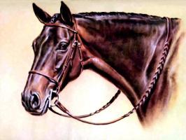 Дональд Шварц. Лошадь 7