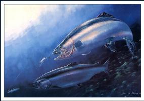Брюс Мьюир. Подводный мир
