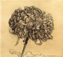 Пит Мондриан. Хризантема