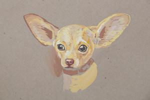 Евгения Брайд. Собака породы Чихуа Хуа