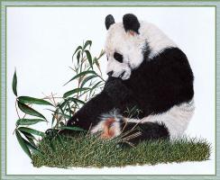 Дональд Хейвуд. Большая панда