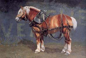 Патриция Борк. Лошадь