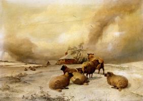 Томас Сидней Купер. Овцы