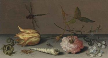 Балтазар ван дер Аст. Натюрморт с тюльпаном, розой, ящерицей и стрекозой