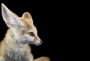 Brad Wilson. Fennec Fox#1