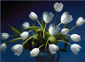 Саймон Кейн. Красивые белые тюльпаны