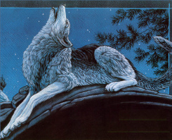 Кристофер Каньон. Волк воет в лесу