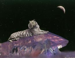 Барри Чал. Тигр на кристалле