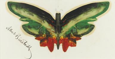 Альберт Бирштадт. Зеленая бабочка