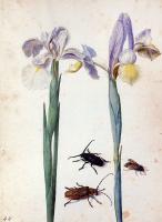 Георг Флегель. Два цветка и мухи