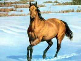 Крис Каммингс. Лошади в тумане 001 Четверть лошади буланая