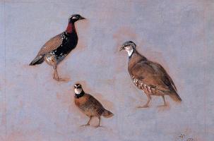 Генриетта Роннер-Книп. Три птицы