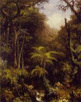 Мартин Джонсон Хед. Бразильский лес