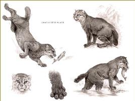Роберт Даллет. Плоскоголовая кошка