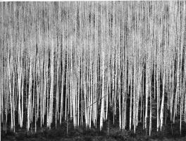 Джон Секстон. Деревья