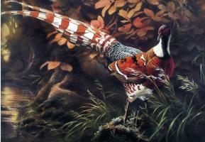 Цзэн Сяо Лиан. Птицы 59