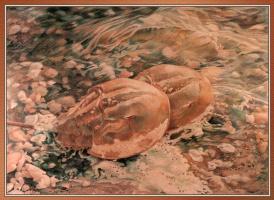 Нэнси Гаврон. Любовь на берегу моря
