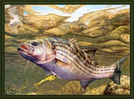 Марк Суссино. Рыба